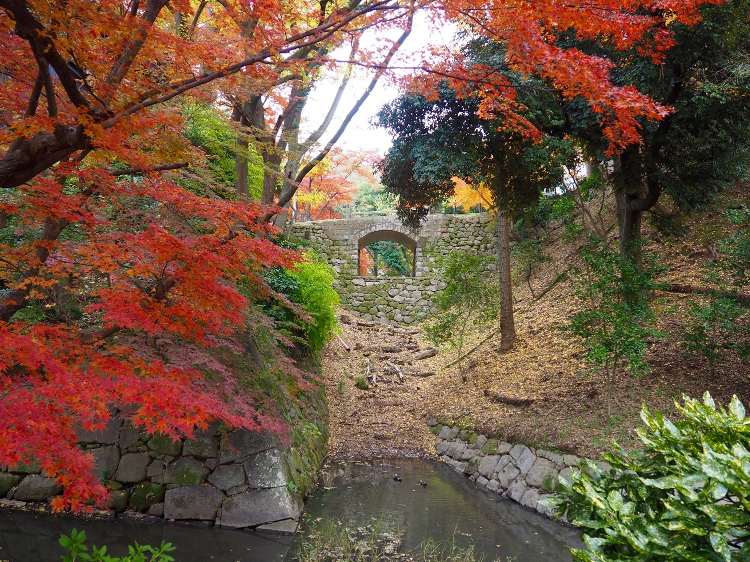 autumn leaves in Central Japan
