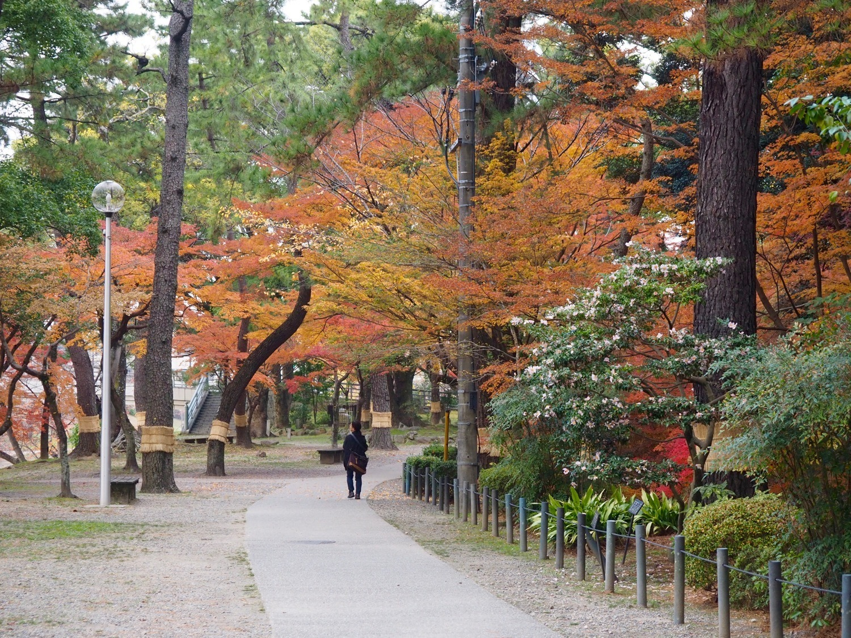 Okazaki Castle autumn leaves