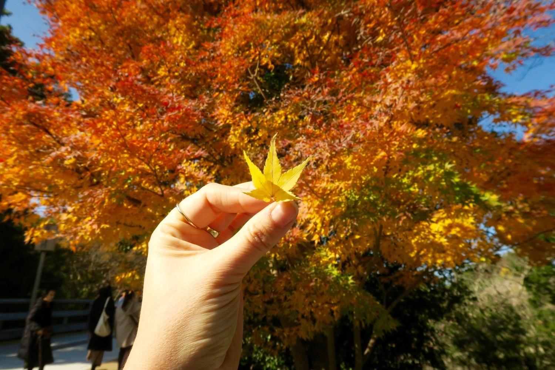 Ise leaves in Japan