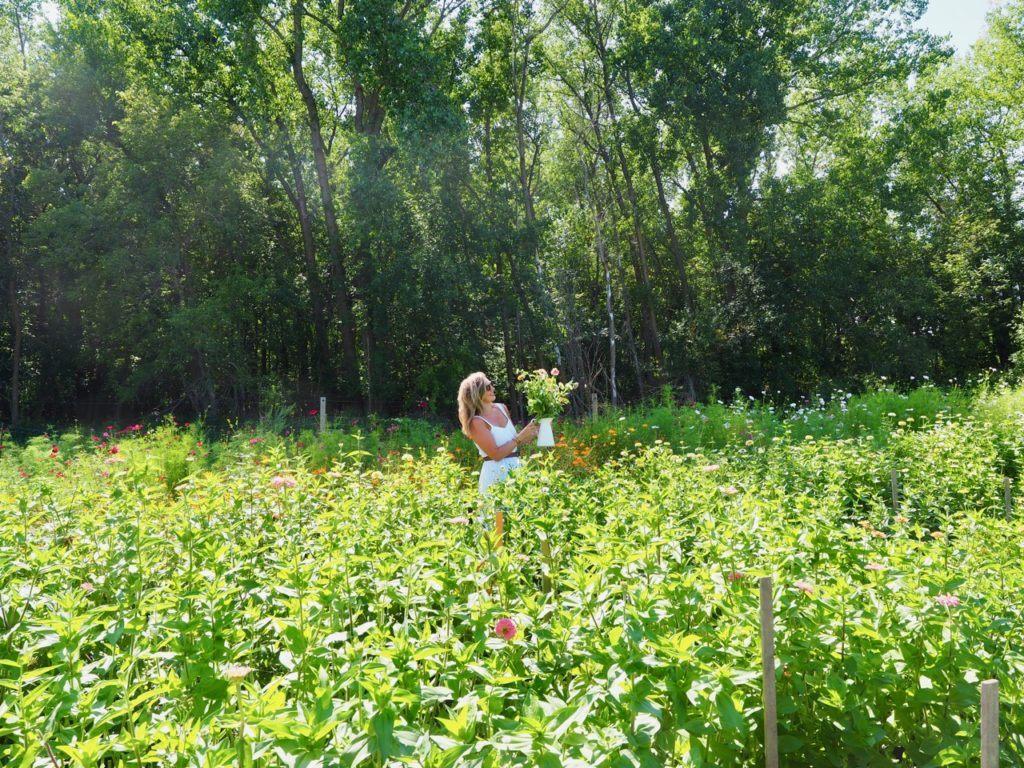 Miss Millie's flower farm