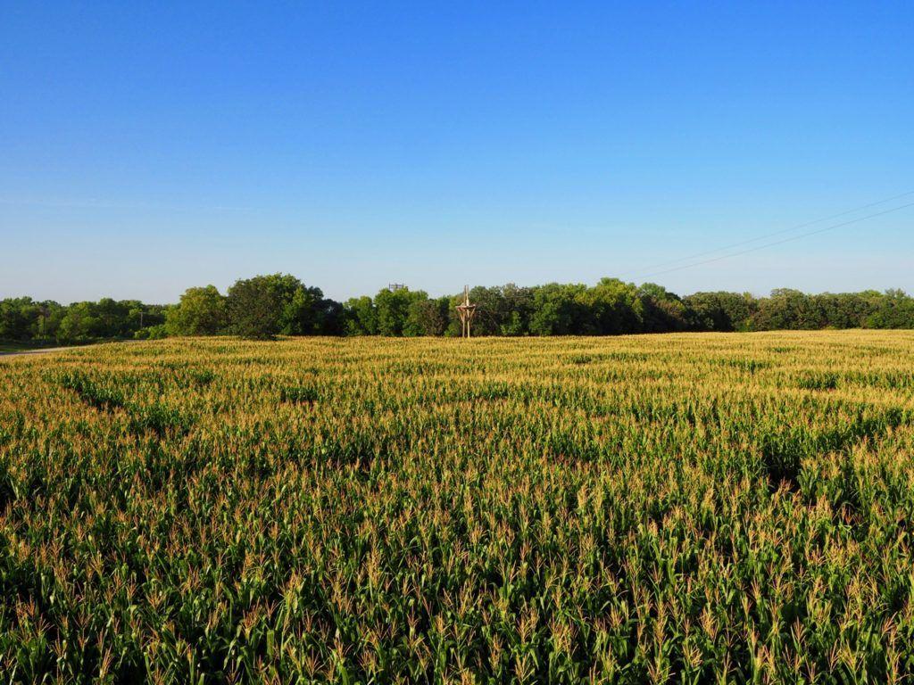 A Maze in corn Manitoba