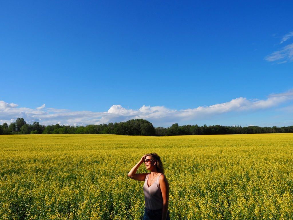 Canola fields in Swan Valley Manitoba