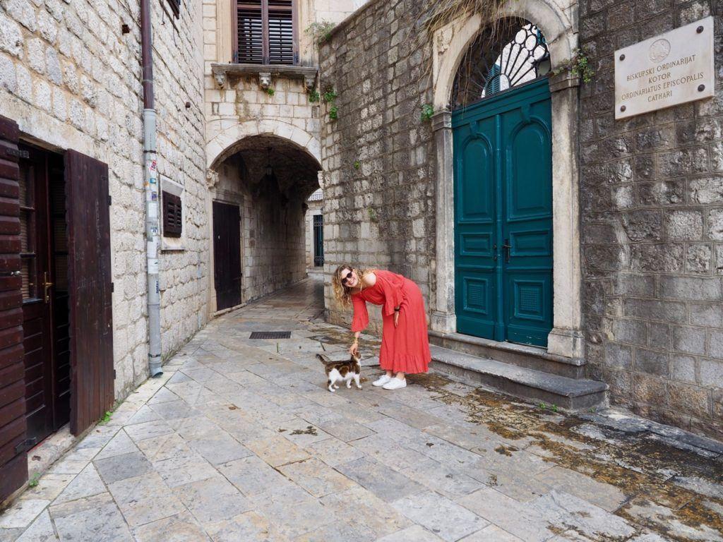 Cats in Kotor
