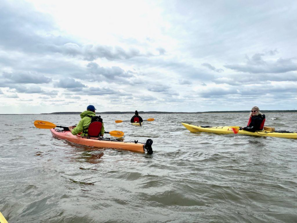 Kayaking with Belgua whales in Churchill