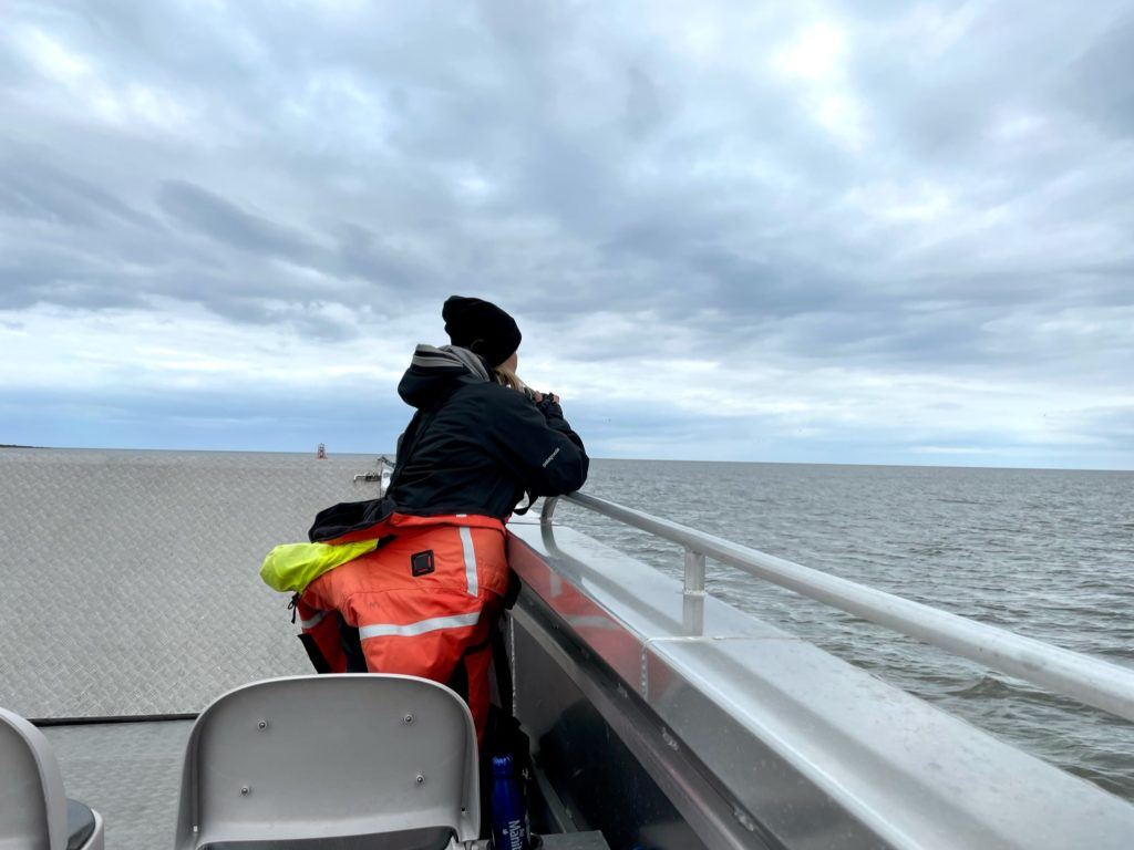 Looking out for belugas in Churchill