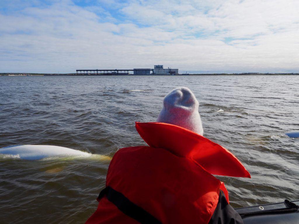 Watching belugas from a Zodiac in Churchill