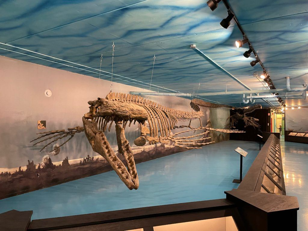 Canadian Fossil Discovery Centre - things to do in Morden Winkler